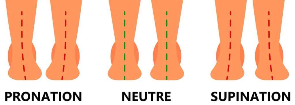 pronation neutre supination
